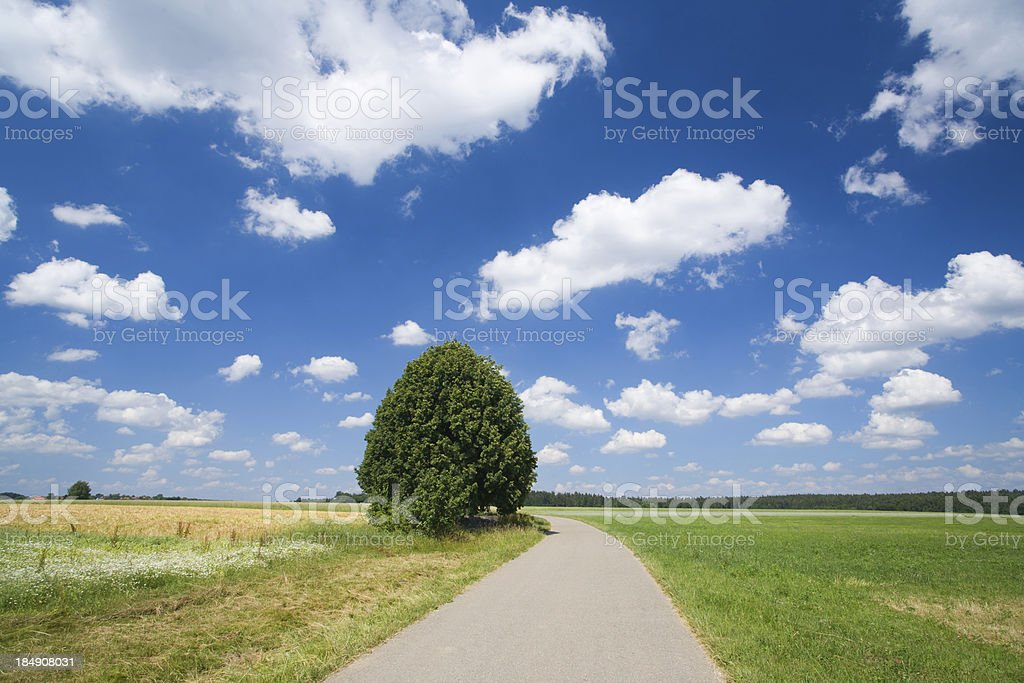 lime tree in summer landscape stock photo
