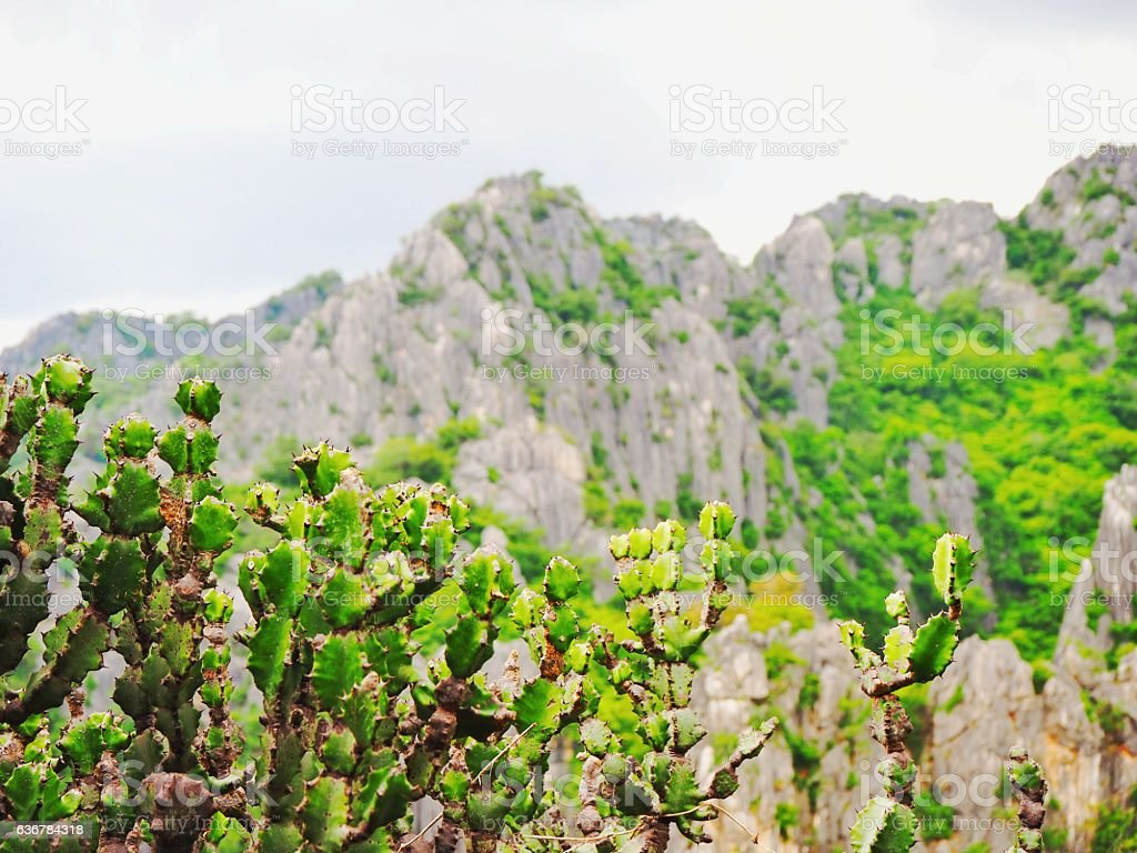 Limestone mountain. stock photo