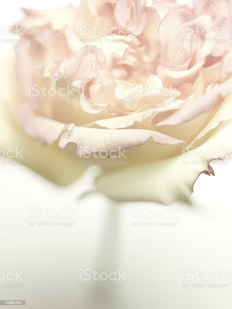 limited focus flower royalty-free stock photo