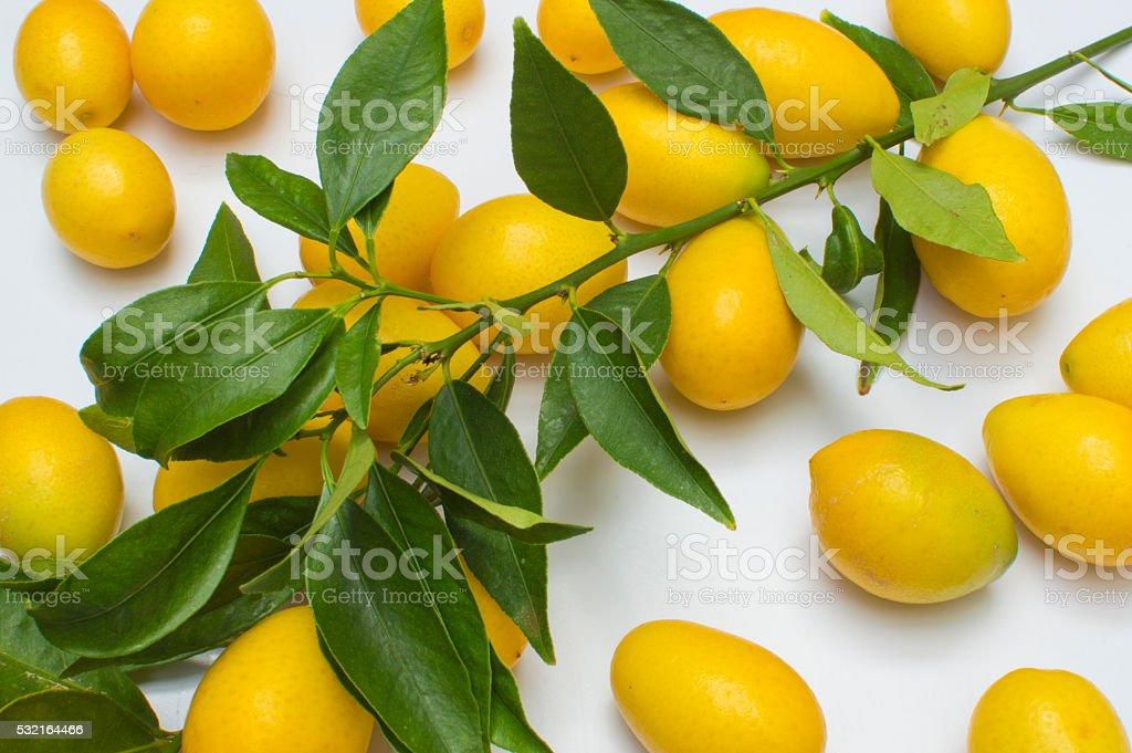 limones pequeños, fondo blanco, le limones hojas de con photo libre de droits