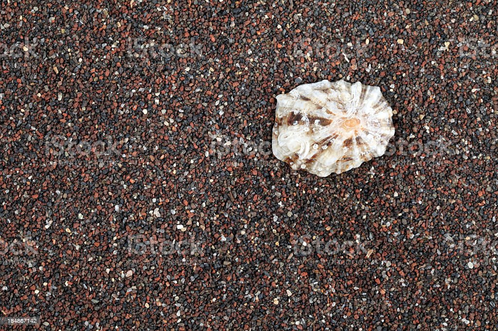 Limpet royalty-free stock photo