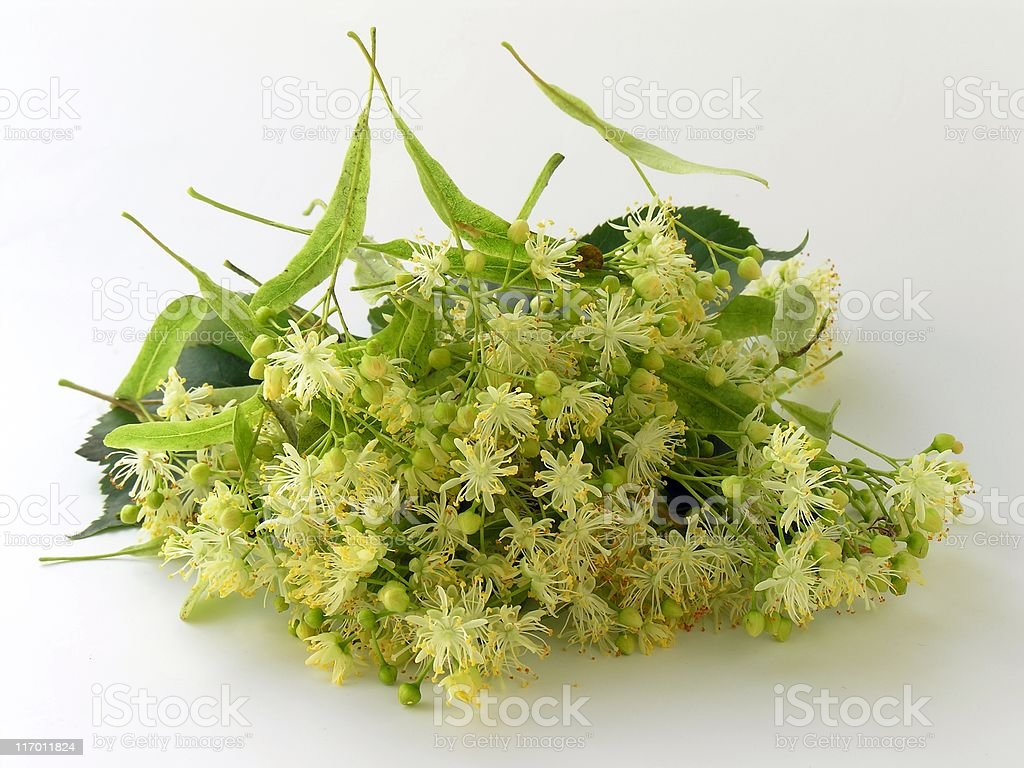 linden flowers as natural medicine royalty-free stock photo