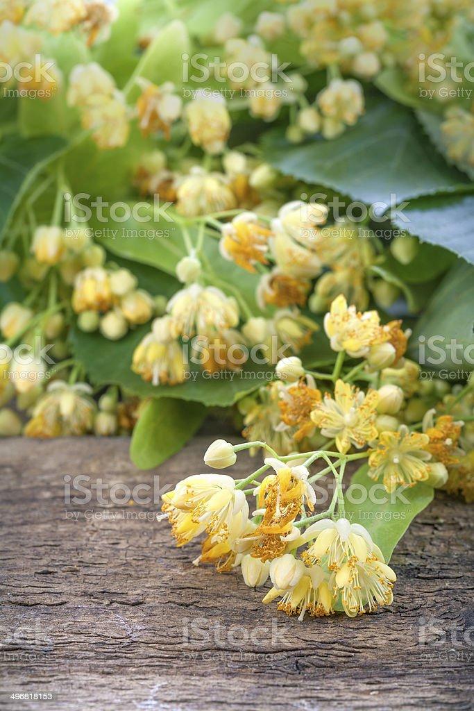 linden tea stock photo
