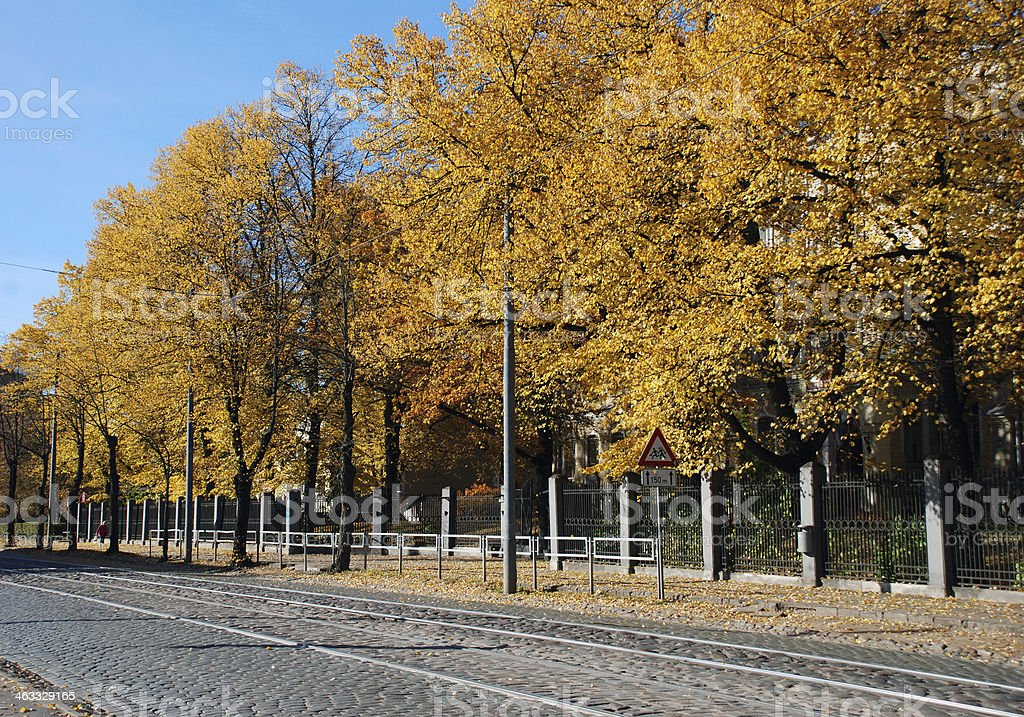 Linden trees in autumn royalty-free stock photo