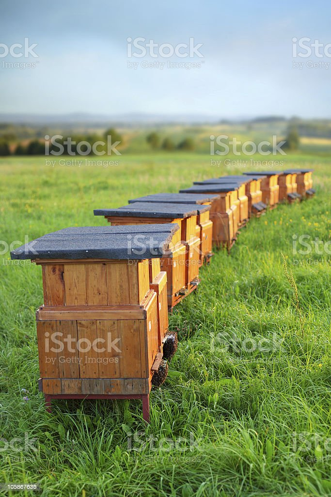 Line of Bee hives in a grassy field royalty-free stock photo