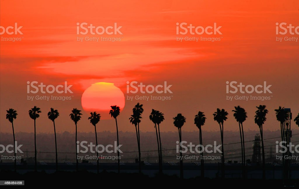 Line of Palms at Sunset stock photo