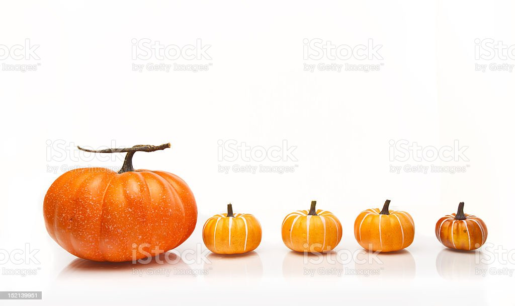 Line of pumpkins on a white background royalty-free stock photo