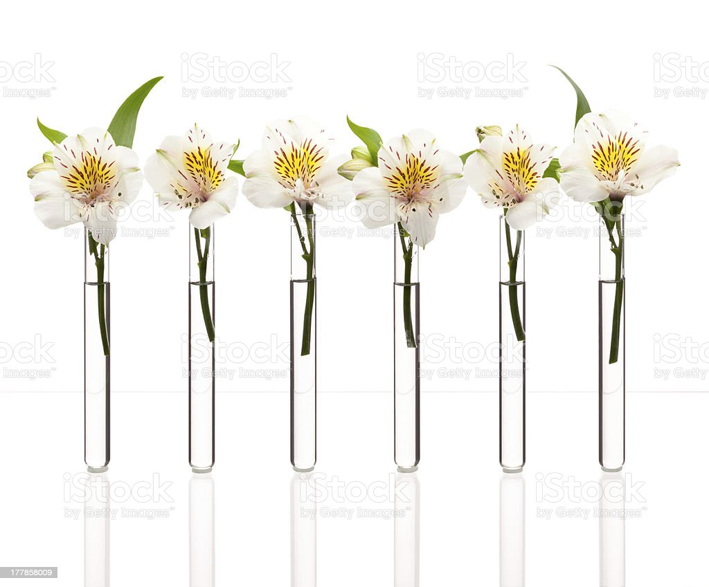 Line of test-tubes with flowers stock photo