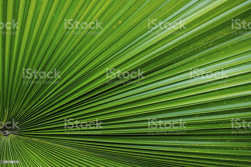 Line of the leaf stock photo