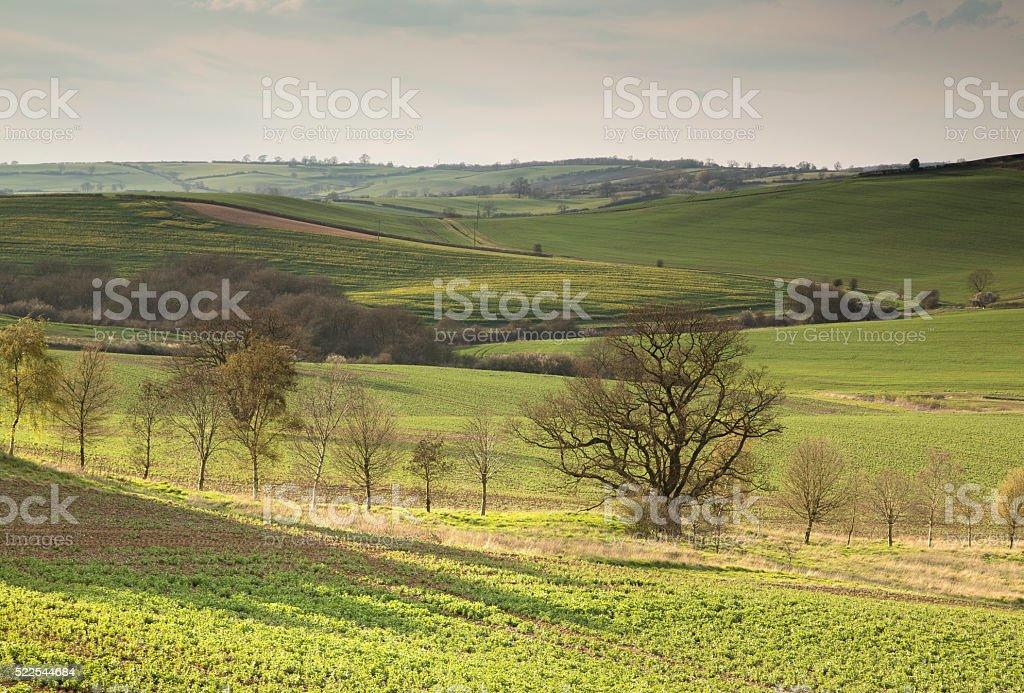 Line Of Trees stock photo