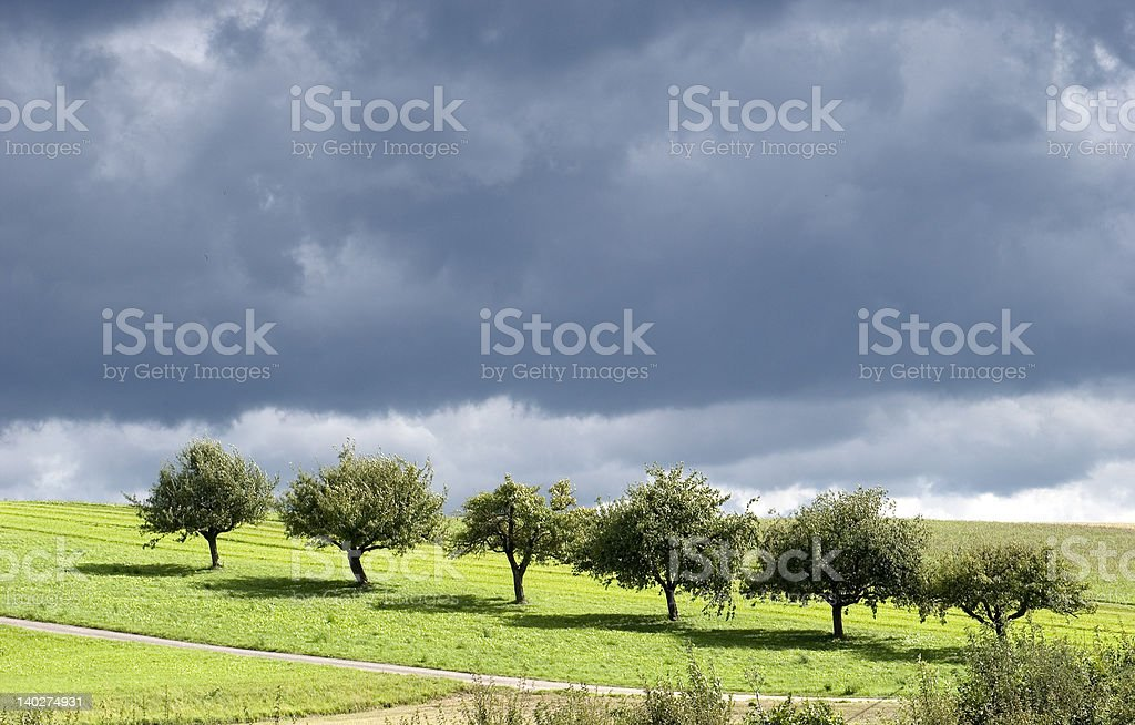 Line of trees under dark cloud. royalty-free stock photo