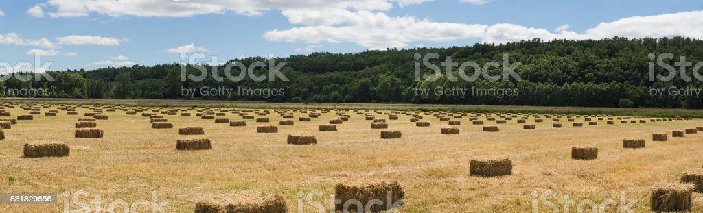 Linearly distributed  Grass Bales - Balas o Pacas de Hierba distribuidas linealmente stock photo