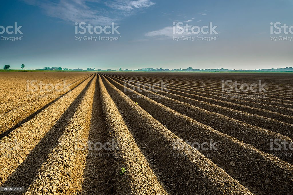 Lines in the field stock photo
