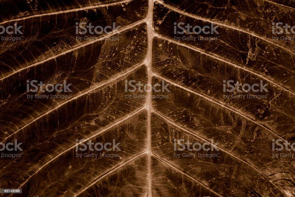 Lines of Nature royalty-free stock photo