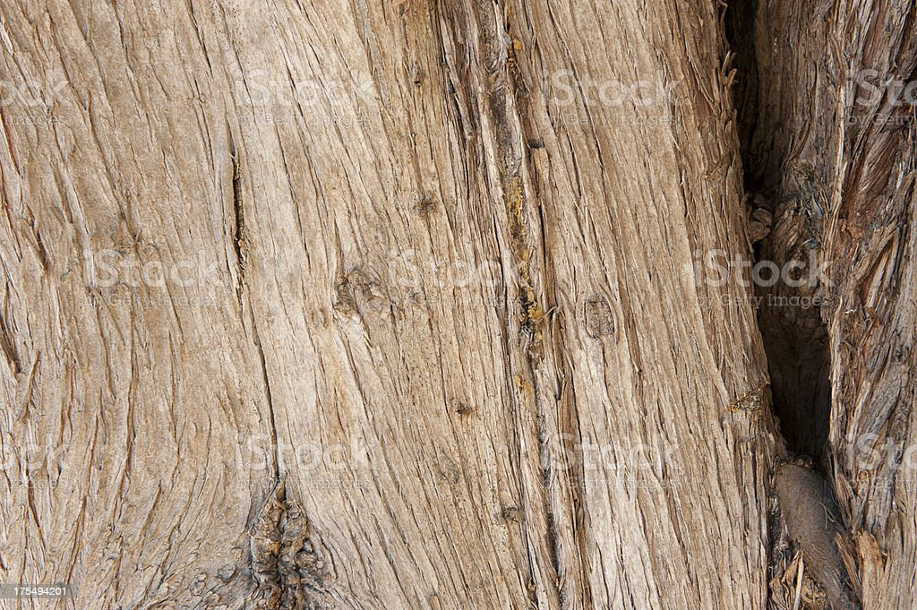 lines on tree royalty-free stock photo