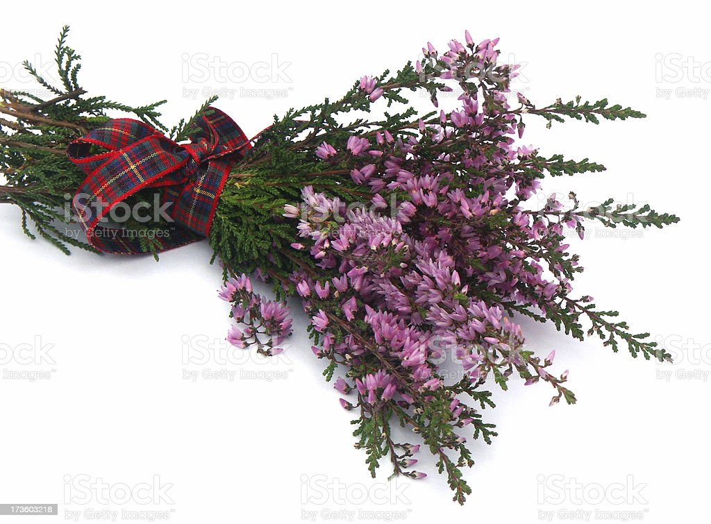 Ling Heather royalty-free stock photo