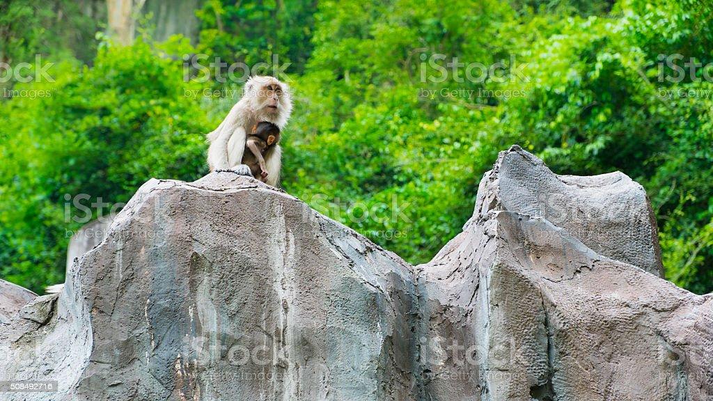 Ling sitzen auf dem Klippe, Affen Lizenzfreies stock-foto
