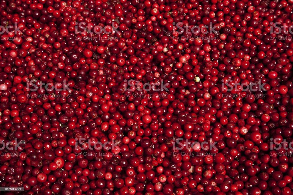 Lingon berries at farmers market. Stockholm Sweden. stock photo