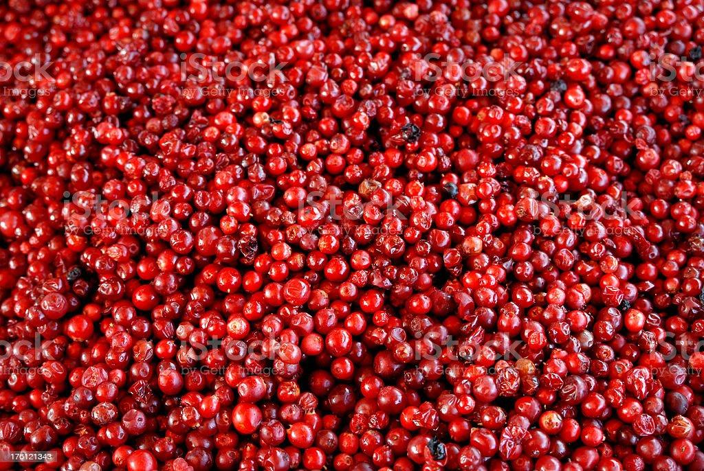 lingonberry stock photo