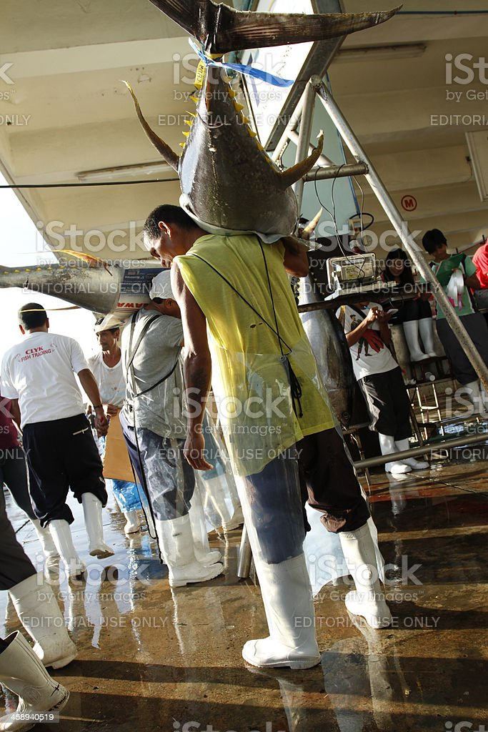 Lining up Tuna for Weighing stock photo
