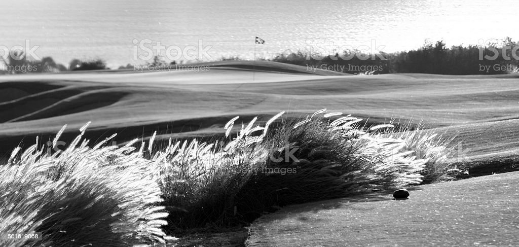 Links Golf Course in Black and White stock photo