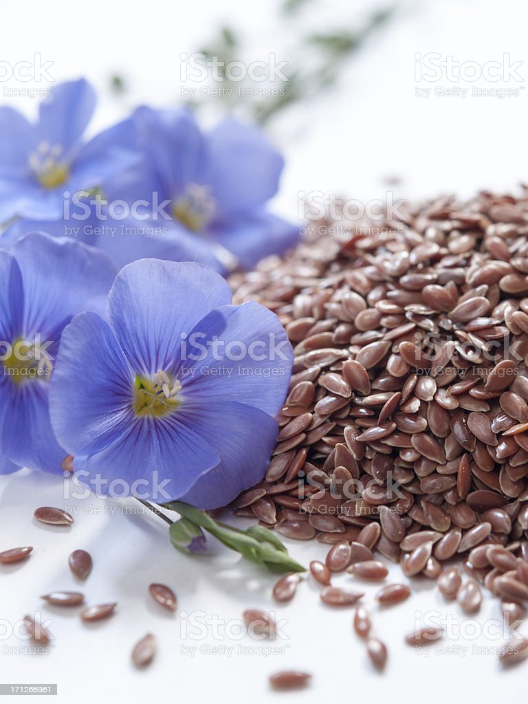 linum usitatissimum, blue lin blooms and seeds on withe stock photo