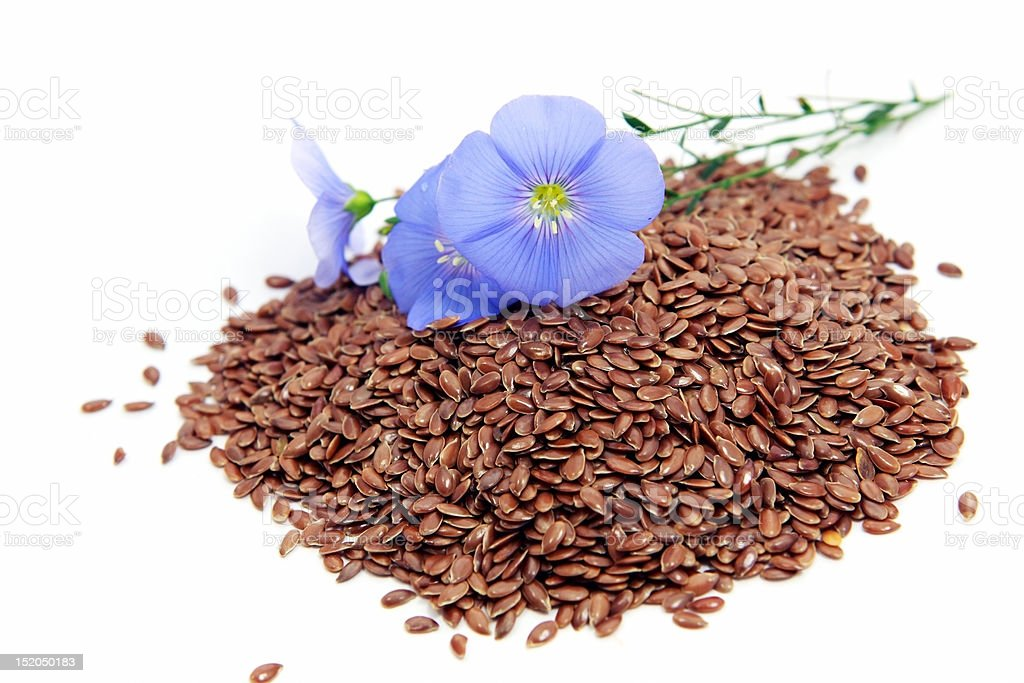 Linum usitatissimum flowers and seeds stock photo