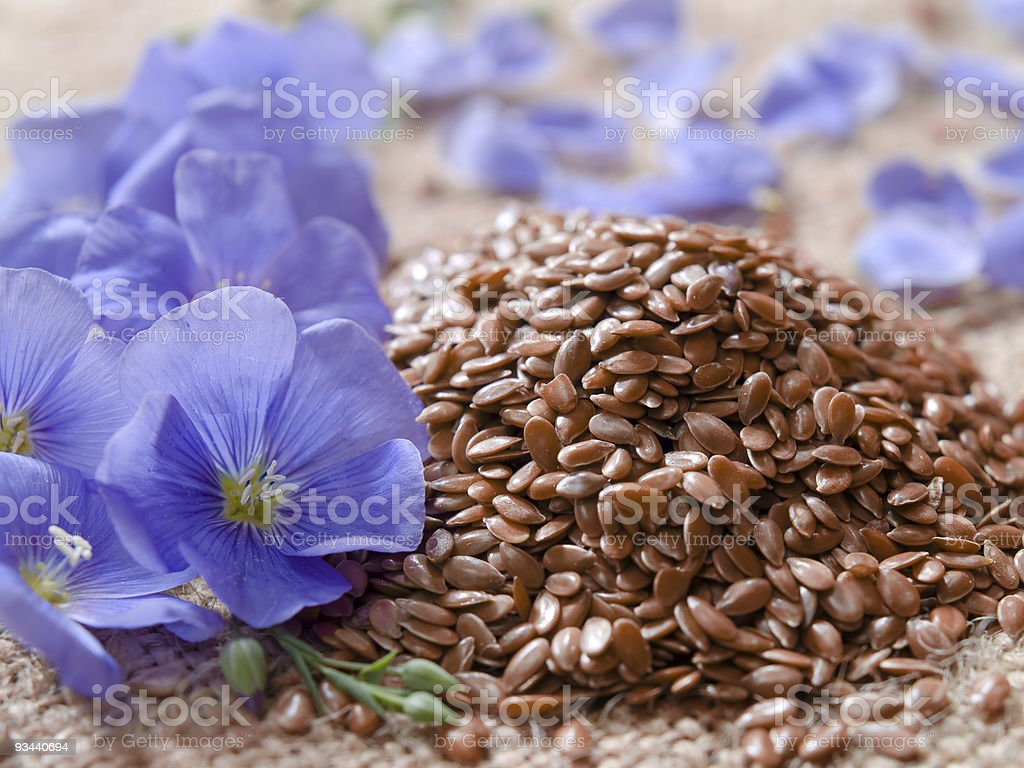 linum usitatissimum l. / linseed stock photo