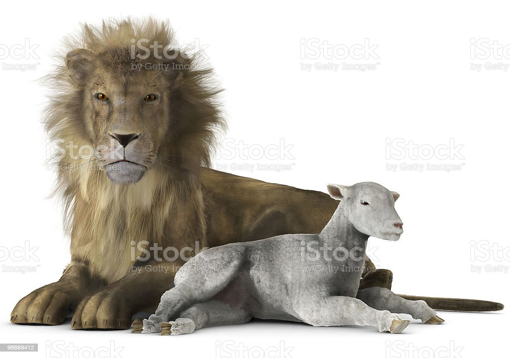 lion and lamb stock photo