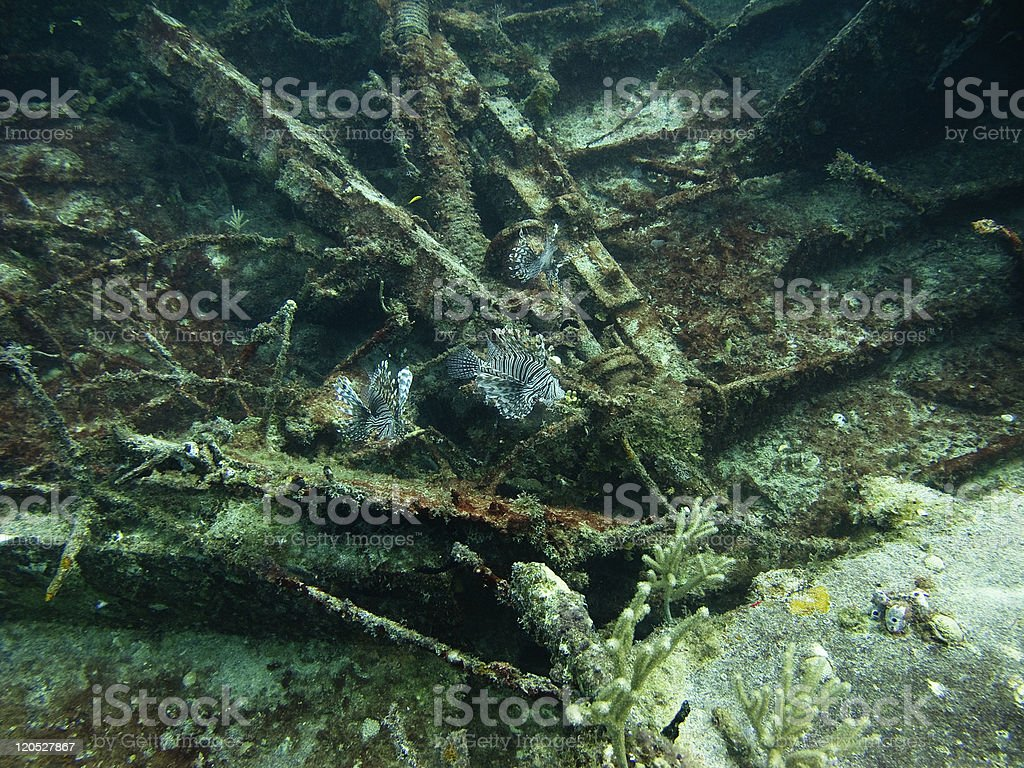Lion fish in a shipwreck stock photo