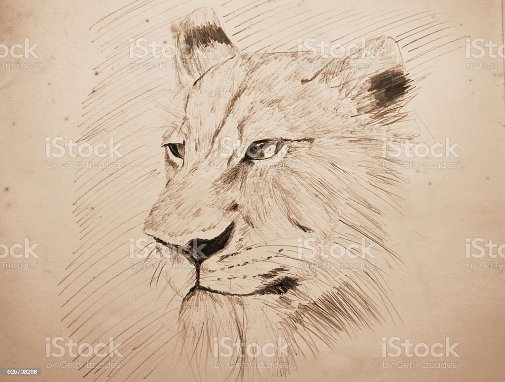 lion pencil sketching on old paper with sepia tone stock photo