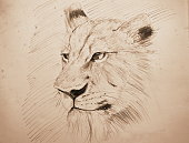lion pencil sketching on old paper with sepia tone