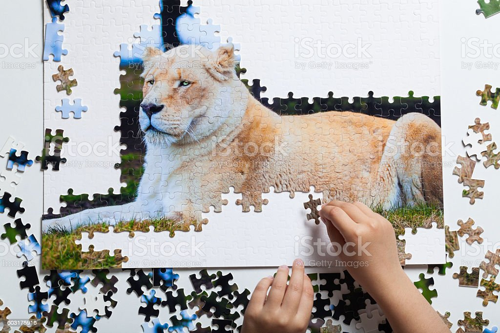 Lion puzzle stock photo