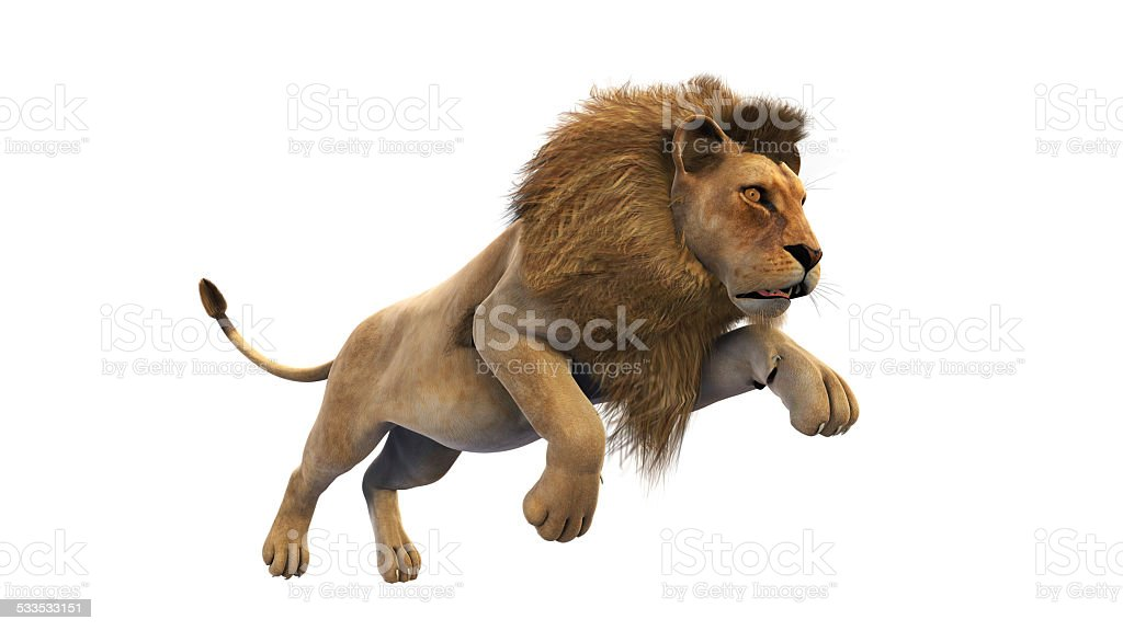 Lion running on white background stock photo