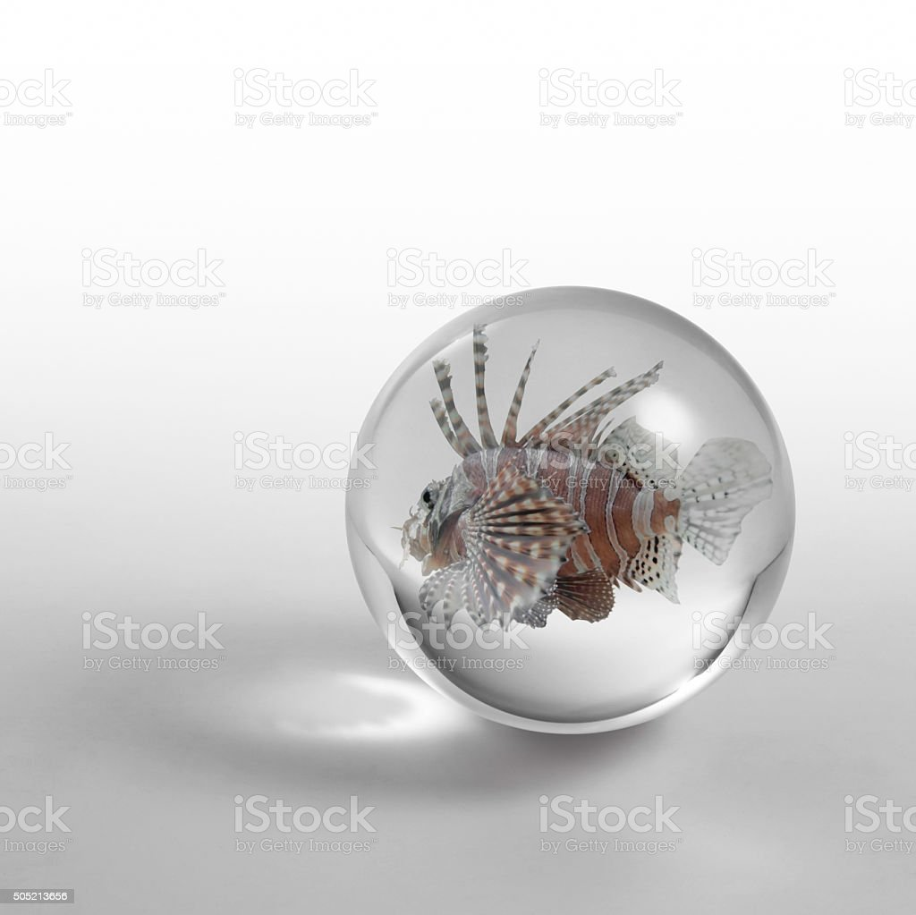lionfish in crystal ball stock photo