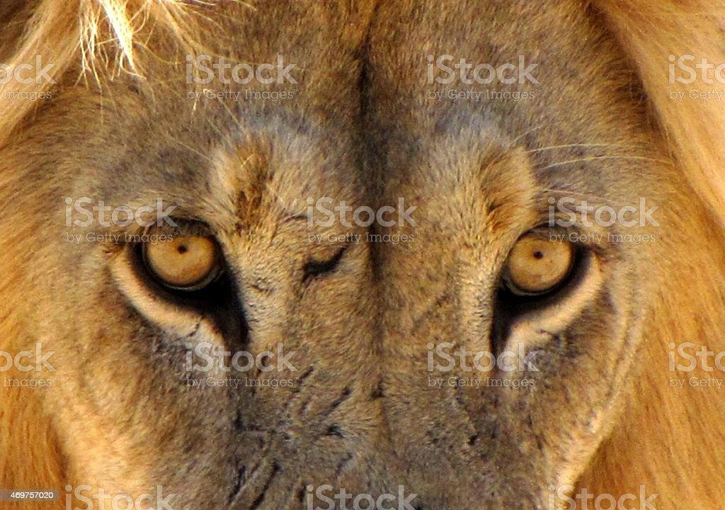 Città di leone foto stock royalty-free