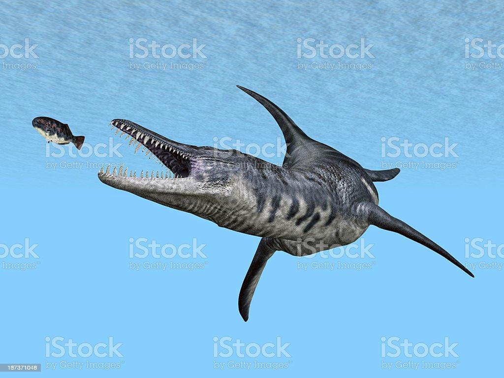 Liopleurodon stock photo
