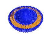 Liposome Bi-layer Structure 3D Illustration
