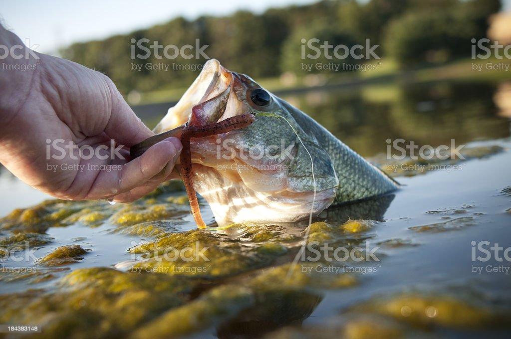 Lipping a bass stock photo