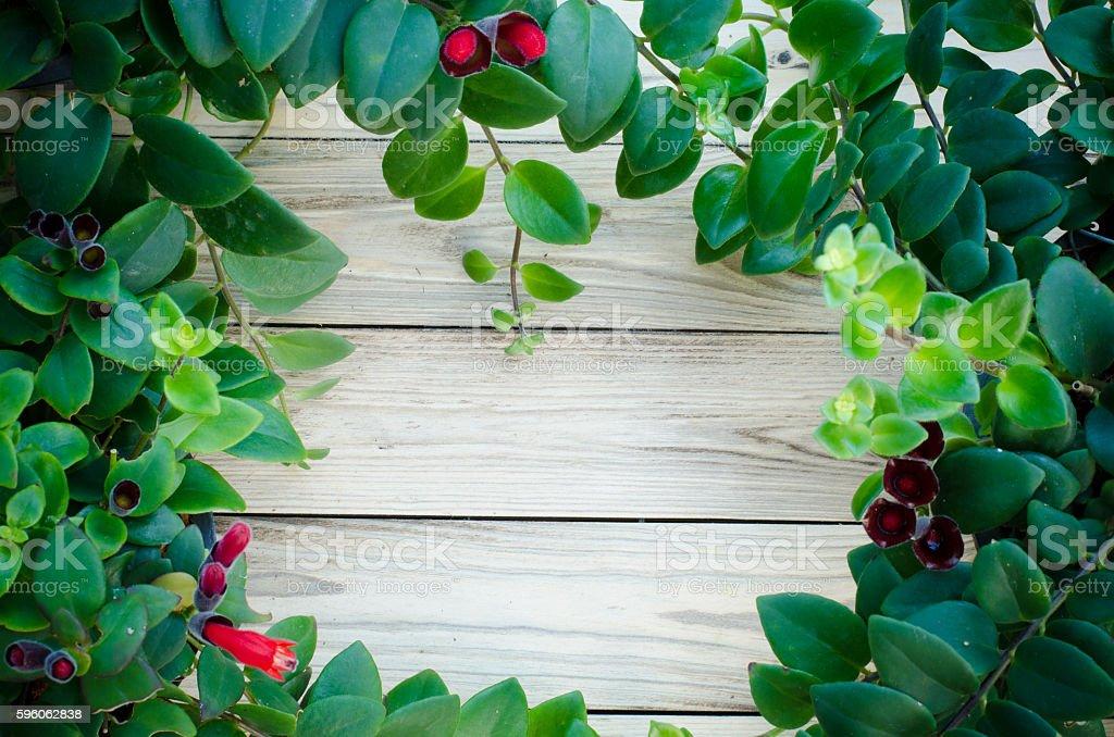 Lipstick vine(Aeschynanthus radicans jack) on wooden background stock photo