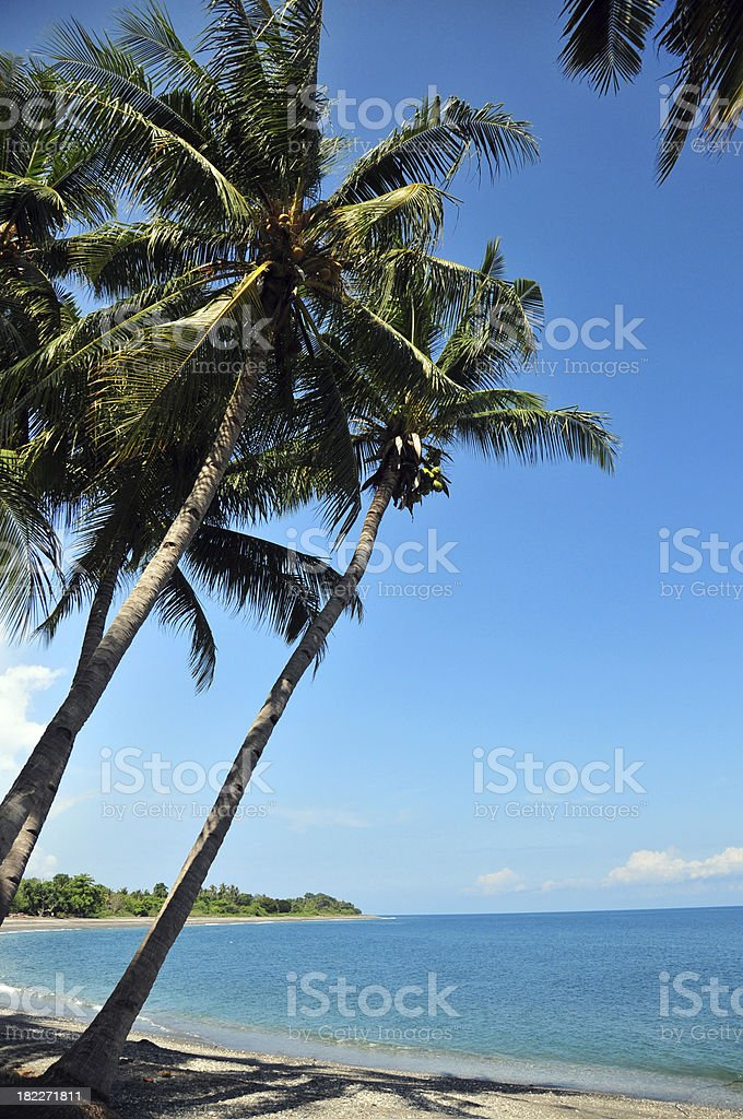 Liqui?a, East Timor: beach and coconut trees stock photo