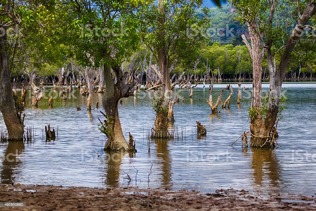 Liquica lake and marshland, East Timor stock photo