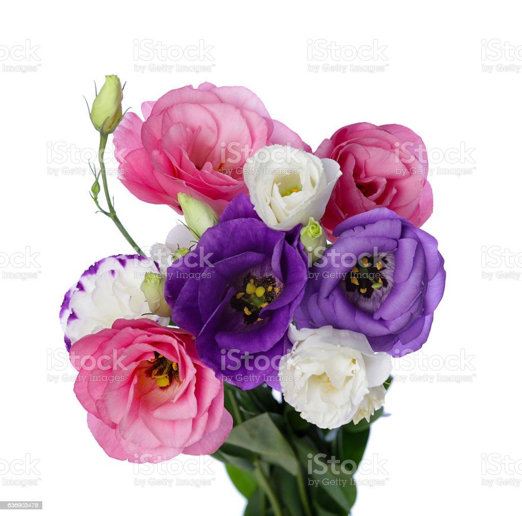 Lisianthus eustoma flower bunch stock photo