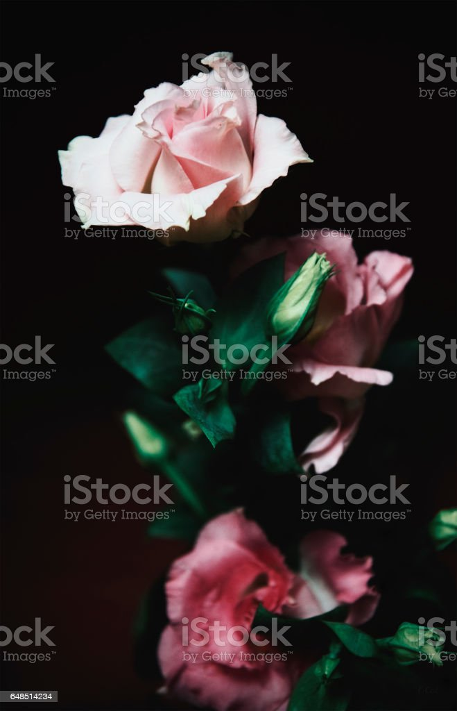 Lisianthus flowers stock photo