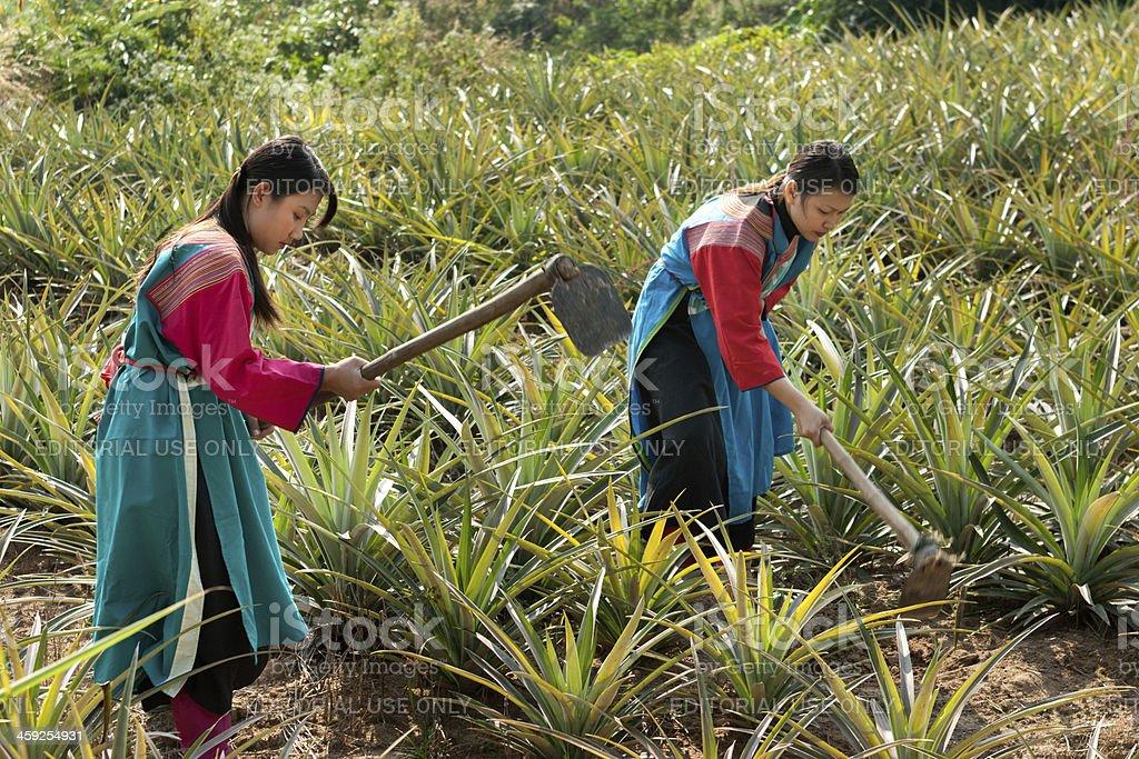 Lisu Hill Tribe Women royalty-free stock photo