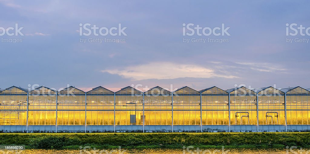 Lit greenhouse at night royalty-free stock photo