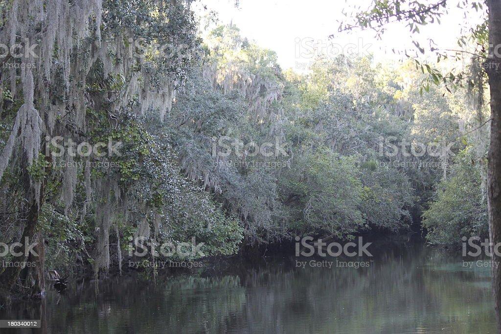 Lithia Springs State Park in Florida stock photo