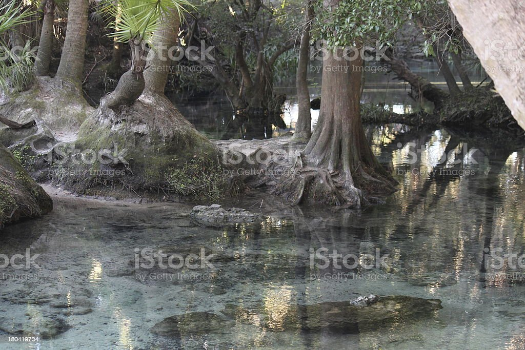 Lithia Springs State Park in Florida royalty-free stock photo