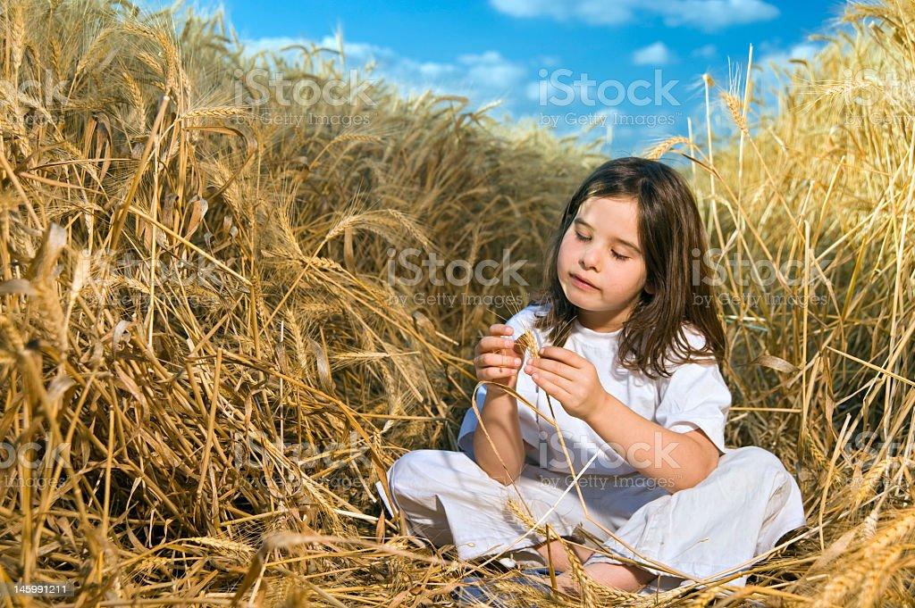 littel girl in a wheat field royalty-free stock photo