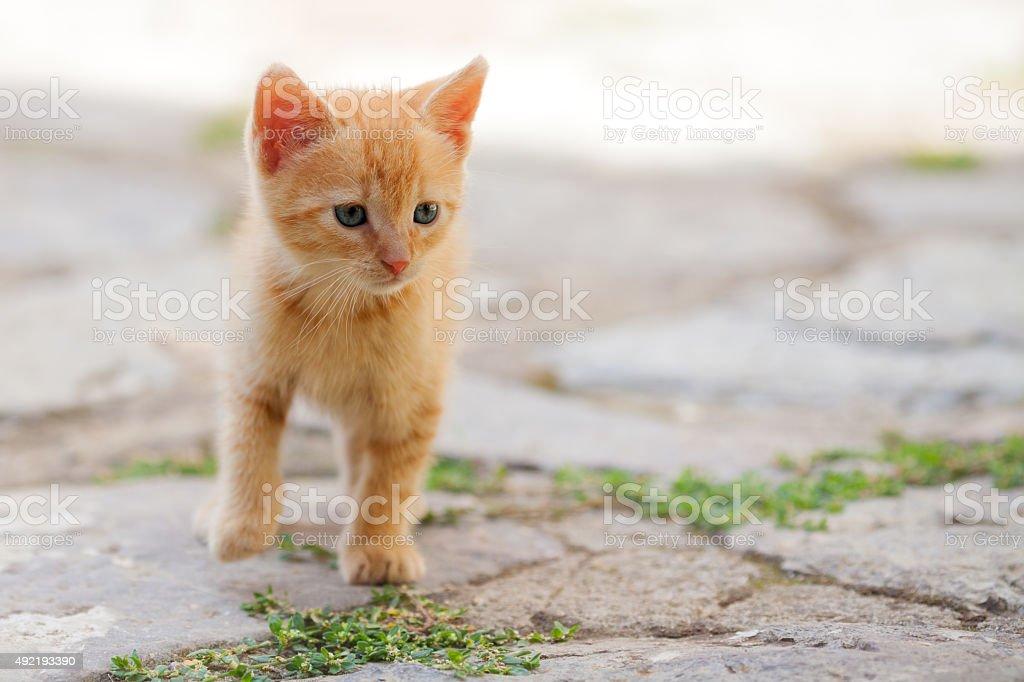 Littel red cat stock photo